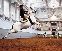 Espectáculo de la Escuela Española de Equitación